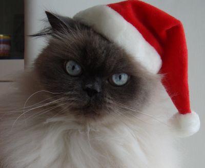 Weihnachtsmerlin